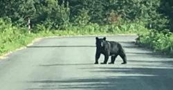 2019年3月12日 熊対策のスプレーの選び方の注意点