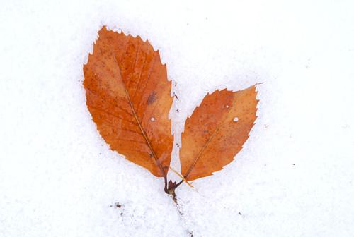 金峰山の雪中葉っぱ美術館