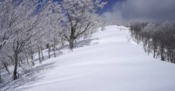 2018年3月17日 姥井戸山の霧氷が美しすぎて!