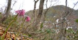 5月9日と16日:真昼岳から水鏡展望