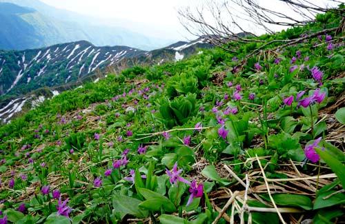 神室山へ役内口を西ノ又からパノラマコースぐるっとin初夏!