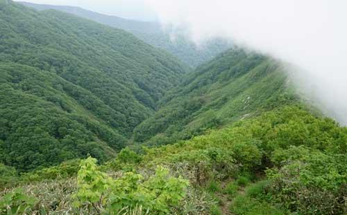 深い谷と樹海