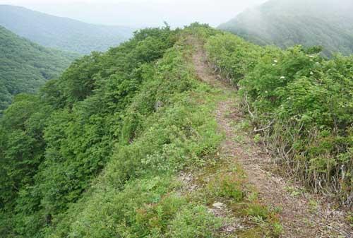 痩せ尾根の登山道2