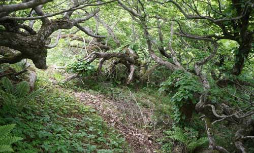 奇形の樹木
